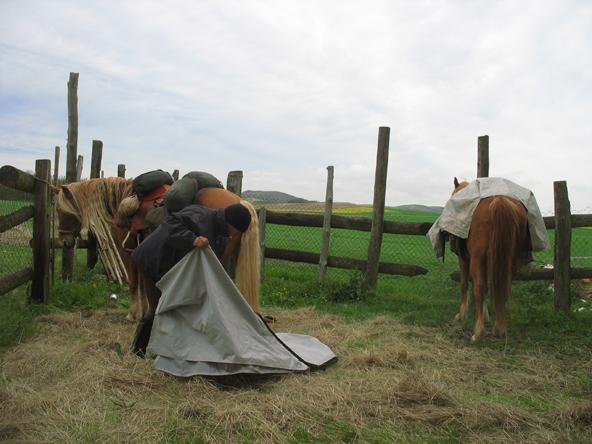 I q u a d e r n i dell 39 alpitrek - Avere un cavallo ...